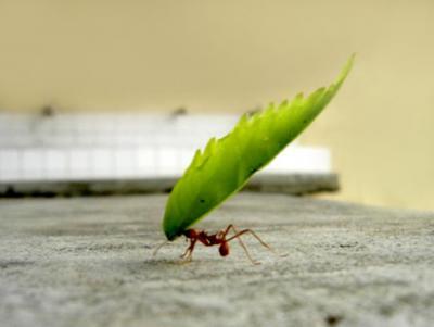 Persistencia...(Gracias Walter y Gandhi)